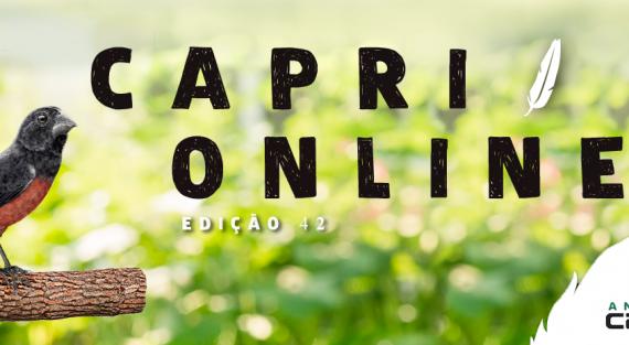 Capri Online n°44
